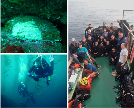 Images from an inter-agency dive trip to San Clemente Island to search for endangered white abalone.