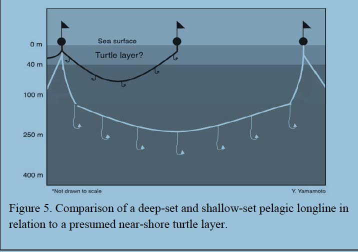 New Fishing Techniques May Help Sea Turtles And Swordfish