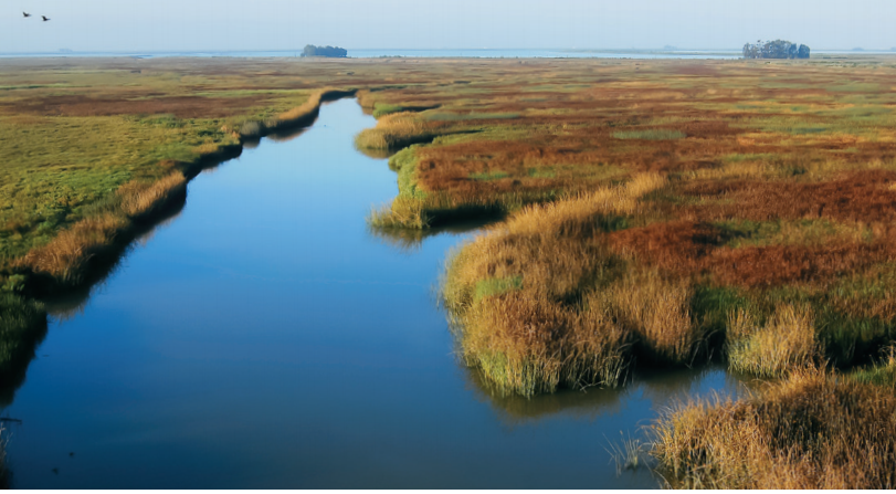 Image of marshland near San Pablo Bay