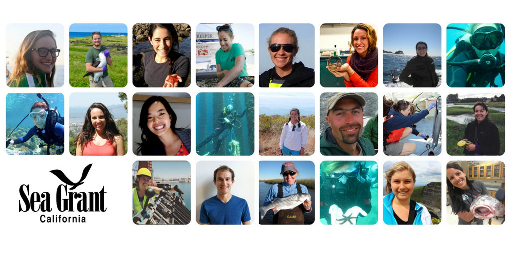Twenty-two graduate students and recent graduates have been awarded competitive California Sea Grant State Fellowships.