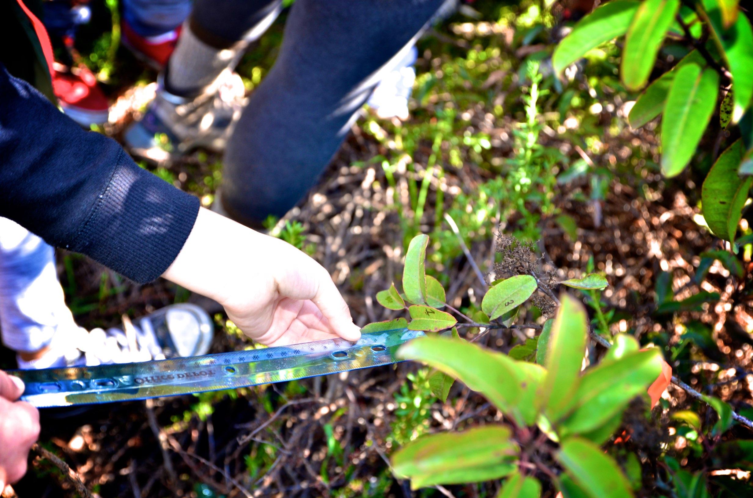 measuring plants in Manzanita Canyon