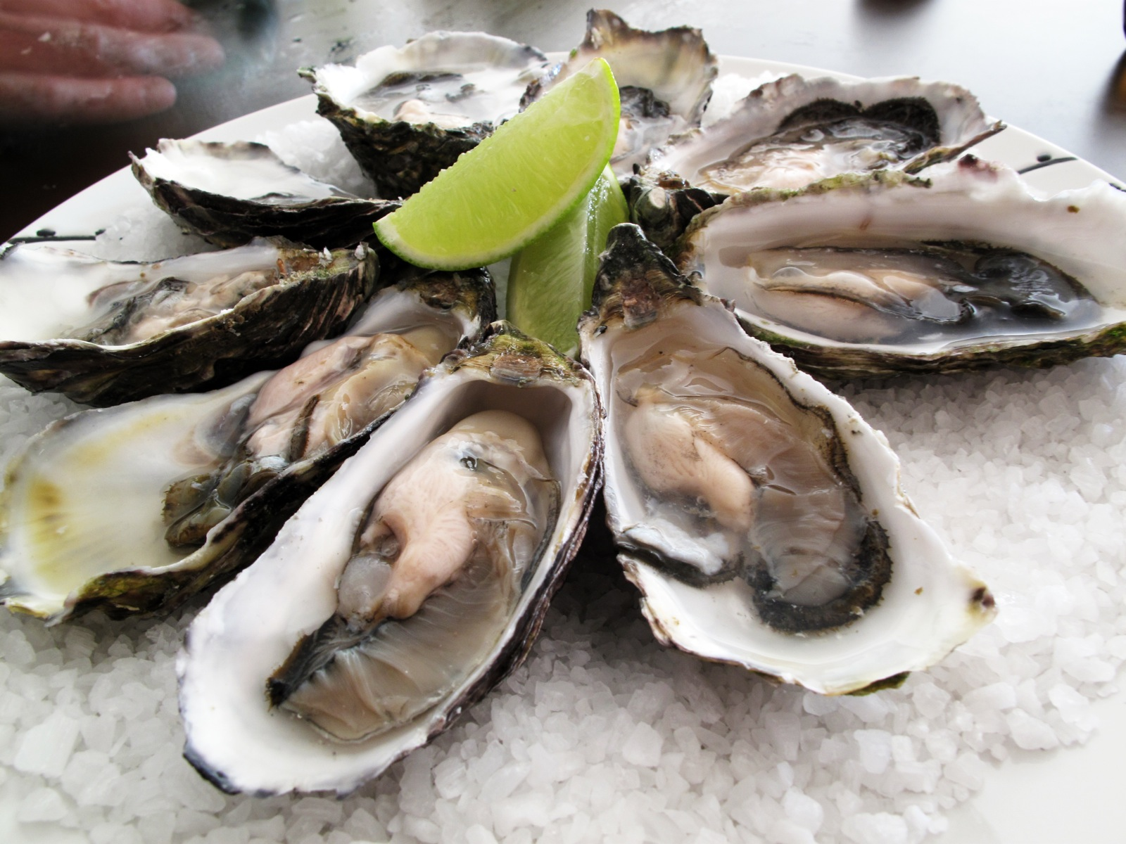 shucked oysters displayed with a wedge of lime