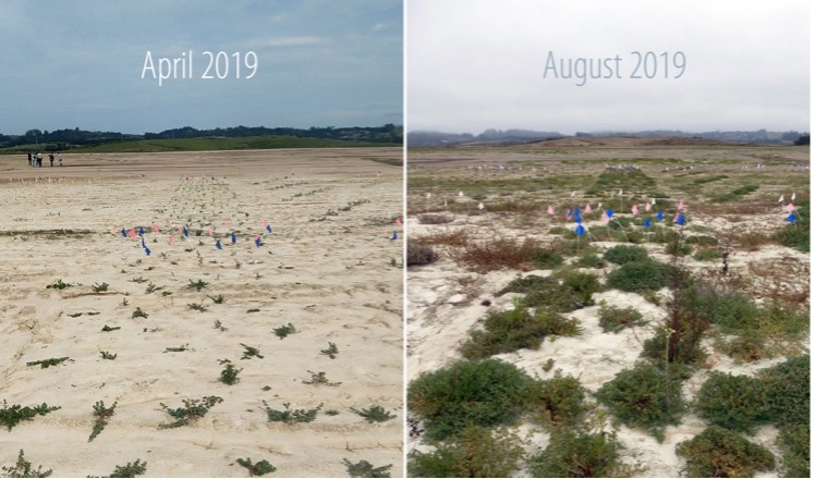 side by side view of marsh plant growth over one season