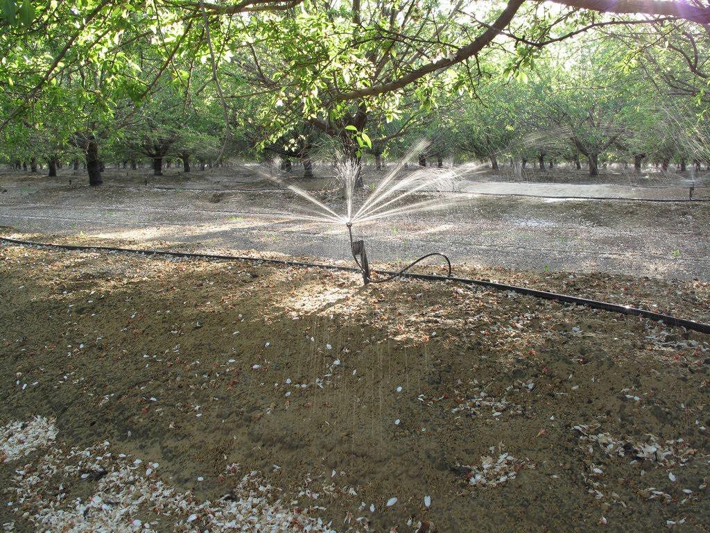 Sprinkler micro irrigation. Photo credit: Jessica Rudnick