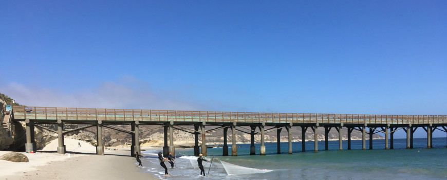 beach with a pier