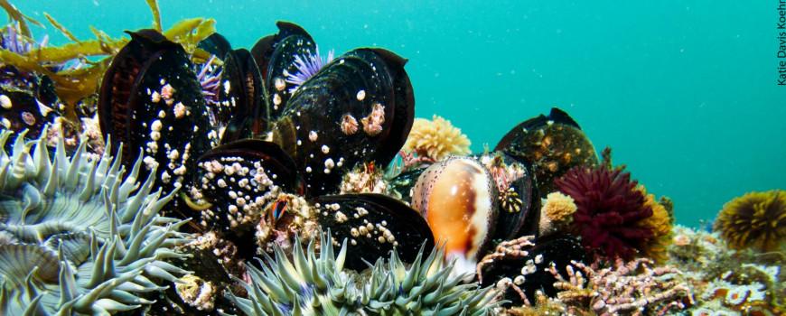 mussels underwater