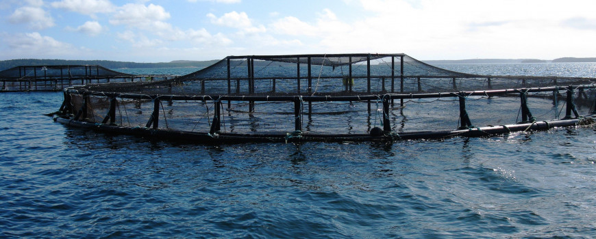 Coastal net pens off the coast of Maine.  Credit: NOAA National Centers for Coastal Ocean Science
