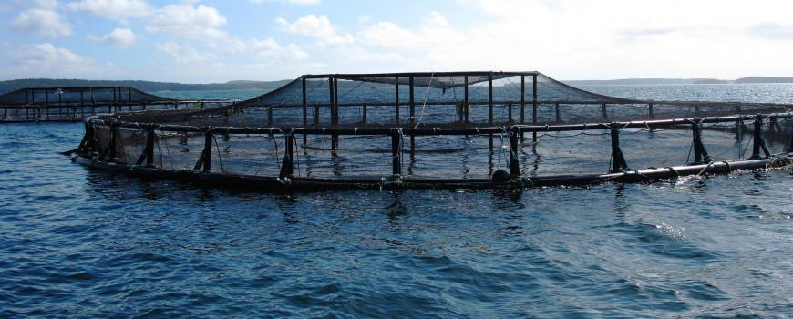 Coastal net pens off the coast of Maine.  Credit: NOAA National Centers for Coastal Ocean Science
