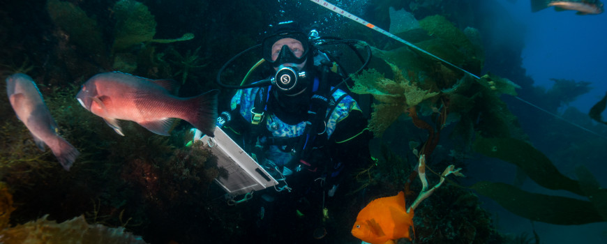 A Reef Check diver records species along an underwater transect. Photo credit: Helen Brierley