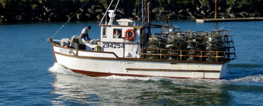 Crab fishermen in Northern California.