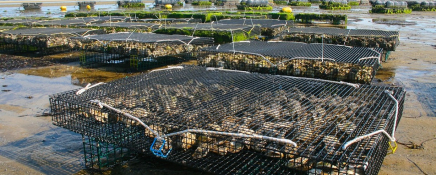 Shellfish aquaculture cages on beach