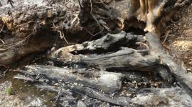 Burned woody debris in Woods Creek