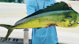 fisherman holding dorado horizontally