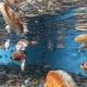scallops swimming in tank - aquaculture