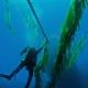 abalone survey - photo courtesy noaa