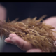 hands holding seaweed