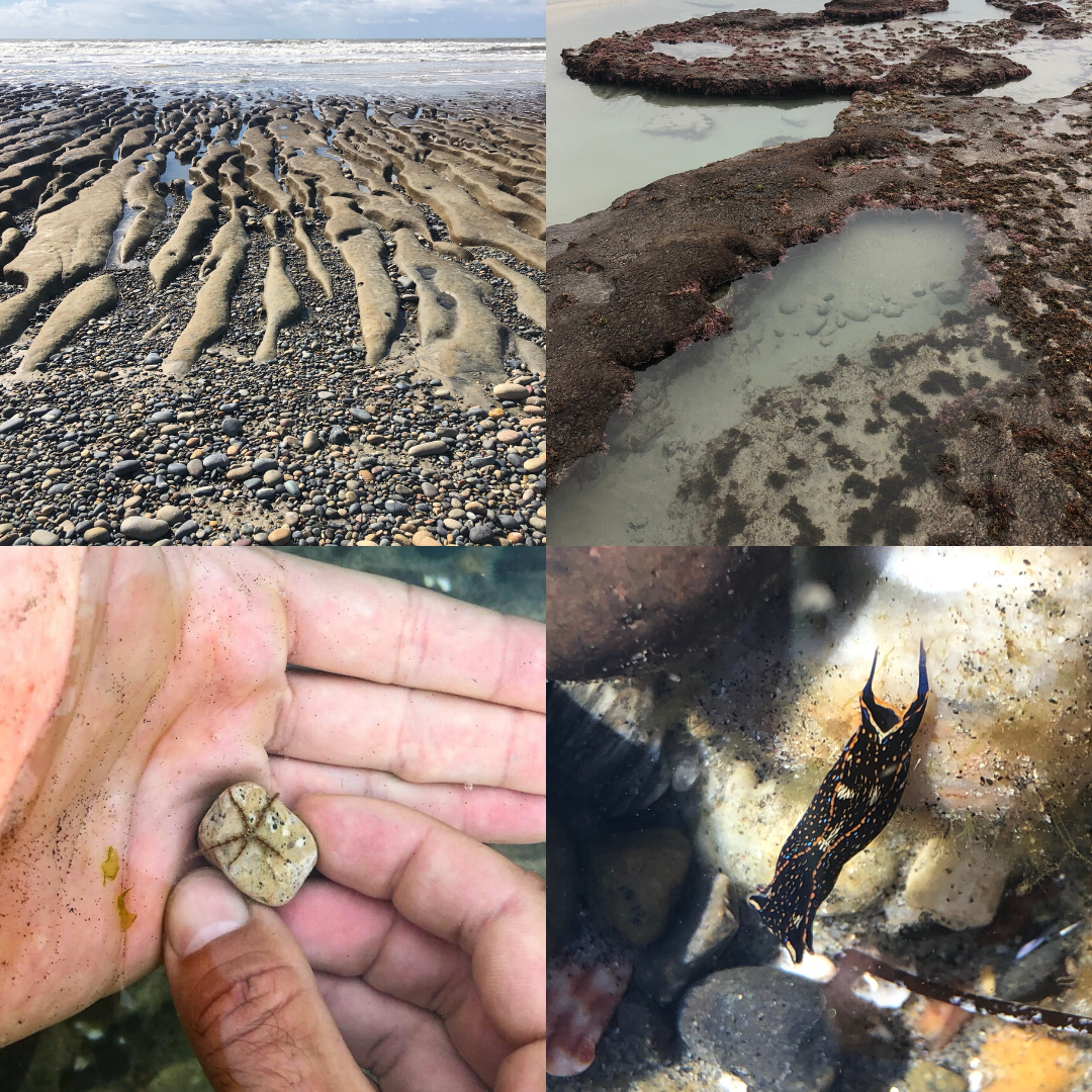 four images of low tide