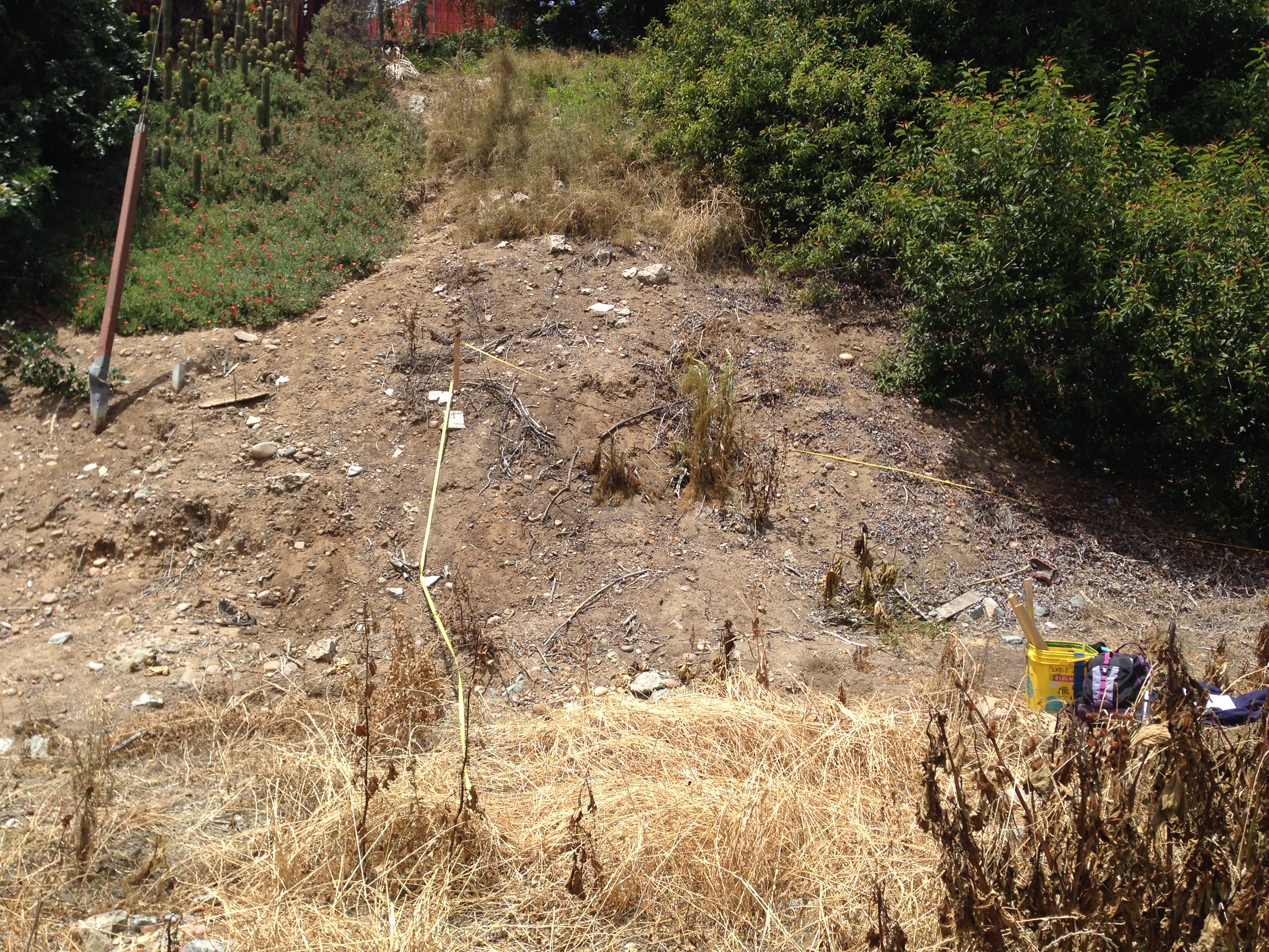 Fig. 5a. A shot of a restoration plot in Manzanita Canyon, before planting, in 2017; see below for photos documenting change in this plot through time.