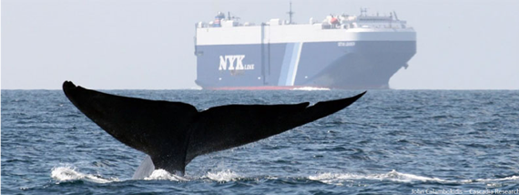 A whale appears close to a container ship.