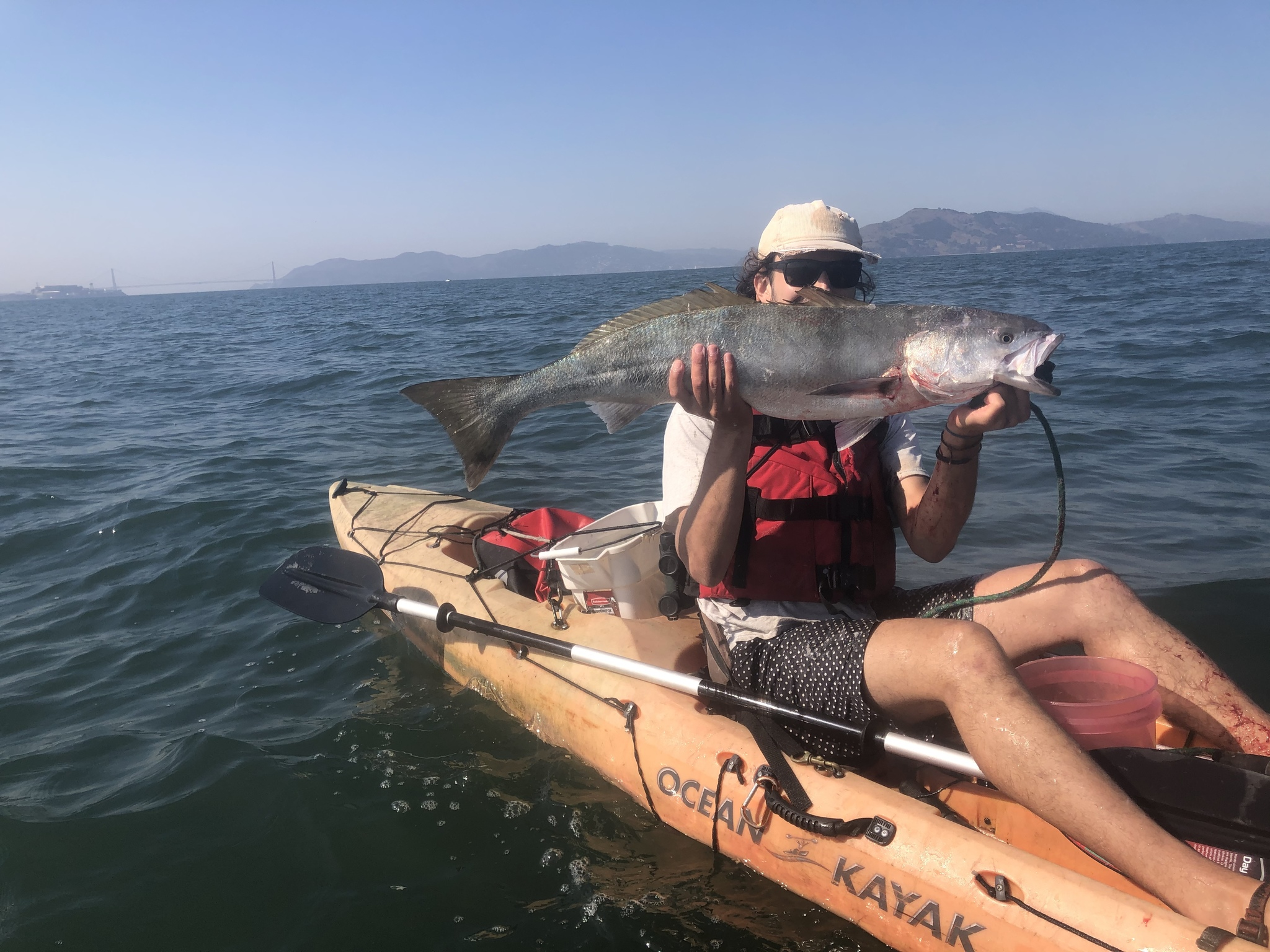 person sitting on an ocean kayak holding up a large white seabass